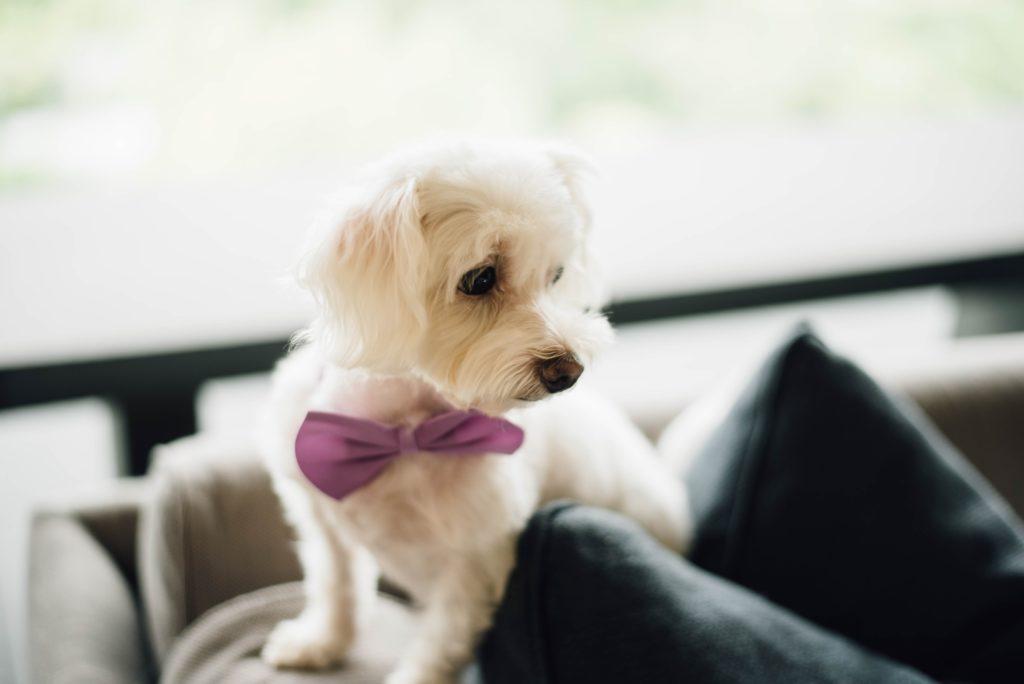 Hochzeit zu zweit mit Hund
